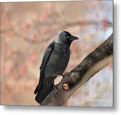 Metal Print featuring the photograph Beauty Of Nature by Rose-Maries Pictures