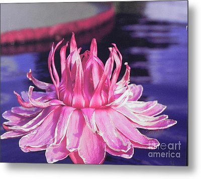 Beauty Of Pink At The Ny Botanical Gardens Metal Print by Chrisann Ellis