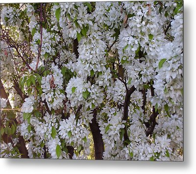 Beauty Of Spring Metal Print by Yvette Pichette