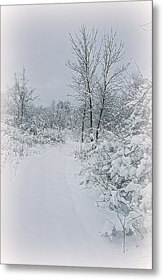 Beauty Of Winter Metal Print