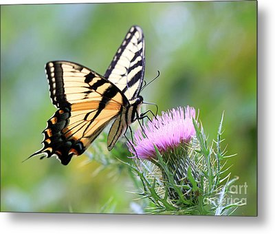 Beauty On Wings Metal Print