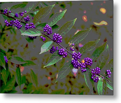 Beautyberry Metal Print by Frank Tozier