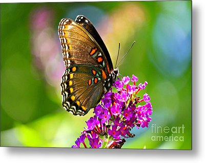 Beautyfly Metal Print by Jay Nodianos