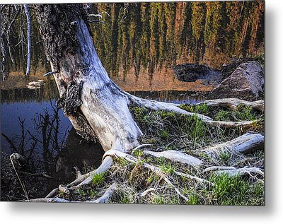 Beaver Pond Reflection 2 Metal Print by Aaron Spong