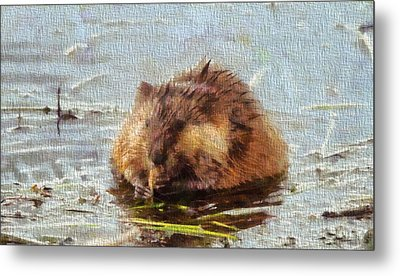 Beaver Portrait On Canvas Metal Print by Dan Sproul