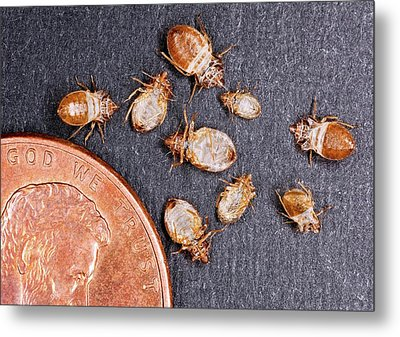 Bed Bugs With A Us One Cent Coin Metal Print