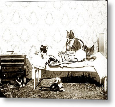 Metal Print featuring the photograph Bed Time For Kitty Cats Histrica Photo Circa 1900 by California Views Mr Pat Hathaway Archives