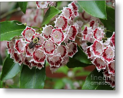 Bee Among Blossoms Metal Print by Theresa Willingham