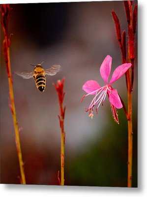 Metal Print featuring the photograph Bee And Flower by Janis Knight