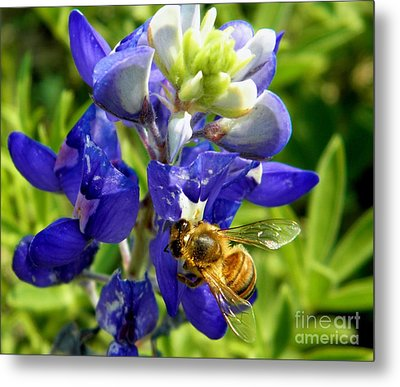 Bee And The Bonnet Metal Print