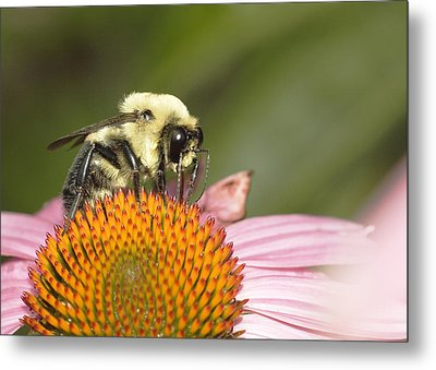 Metal Print featuring the photograph Bee At Work by Robert Culver