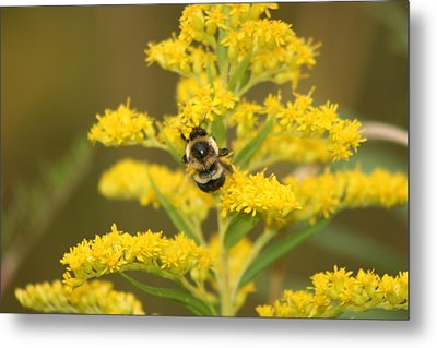 Metal Print featuring the photograph Bee Closeup by Paula Brown