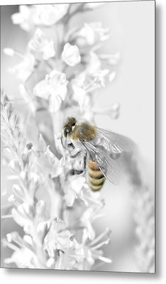Bee Collecting Pollen Metal Print by Tommytechno Sweden