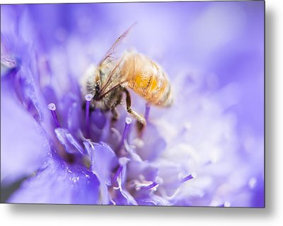 Bee Dream Metal Print by Caitlyn  Grasso