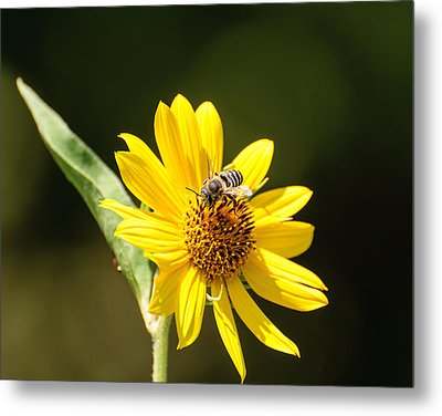 Metal Print featuring the photograph Bee Flower by John Johnson