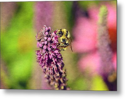 Bee Happy Metal Print by Maria Angelica Maira