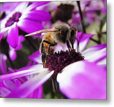 Bee Happy Metal Print by Norma Brock