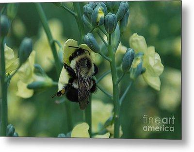 Bee Hugs Metal Print