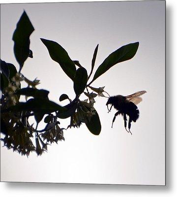 Bee In Flight  Metal Print by Kerri Farley