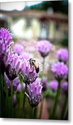Bee In The Chives Metal Print by Joel Loftus