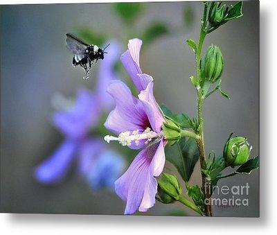 Bee Lavender Metal Print by Nava Thompson