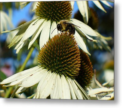 Metal Print featuring the photograph Bee On A Cone Flower by Lingfai Leung