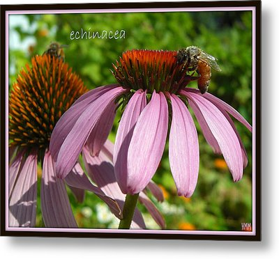 Metal Print featuring the photograph Bee On Echinacea by Heidi Manly