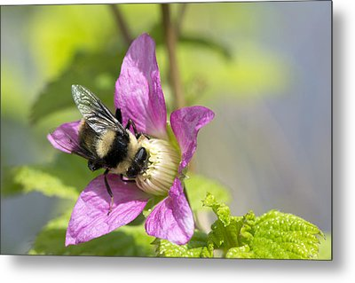 Bee On Flower Metal Print