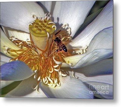 Bee On Lotus Metal Print by Savannah Gibbs