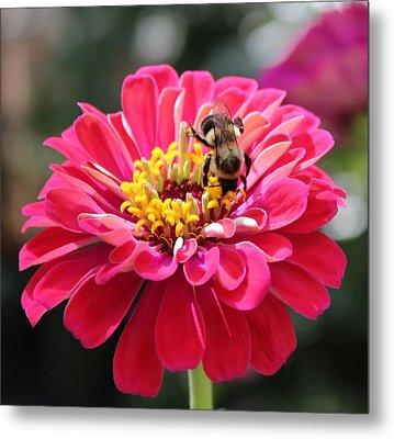 Metal Print featuring the photograph Bee On Pink Flower by Cynthia Guinn
