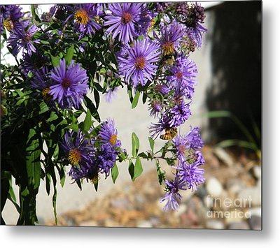 Bee On Purple Metal Print