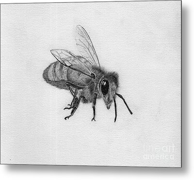 Bee Pencil Drawing Metal Print by Dan Julien