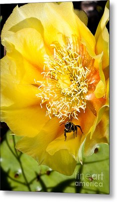 Bee Stands Guard Metal Print