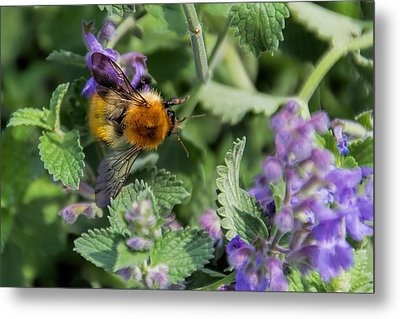 Metal Print featuring the photograph Bee Too by David Gleeson