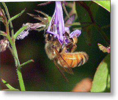 Metal Print featuring the photograph Bee With Flower by Ron Roberts