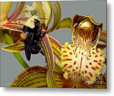Bee With Pollen Sac On Its Back Metal Print by Susan Wiedmann