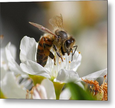 Metal Print featuring the photograph Bee4honey by Patrick Witz