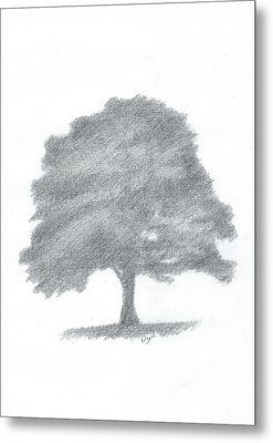 Beech Tree Drawing Number Three Metal Print by Alan Daysh