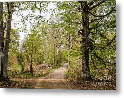 Metal Print featuring the photograph Beeches At Springtime by Kennerth and Birgitta Kullman