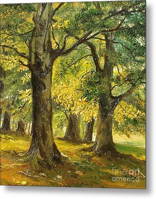 Beeches In The Park Metal Print by Sorin Apostolescu