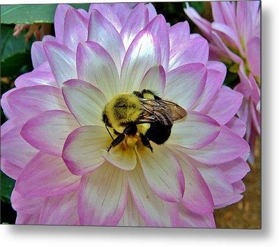 Bee's Delight Metal Print