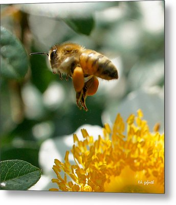 Bee's Feet Squared Metal Print by TK Goforth