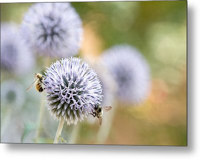 Metal Print featuring the photograph Bees In The Garden by Peggy Collins