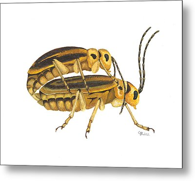 Chrysomelid Beetle Mating Pose Metal Print by Cindy Hitchcock