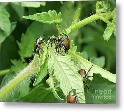 Metal Print featuring the photograph Beetle Posse by Thomas Woolworth