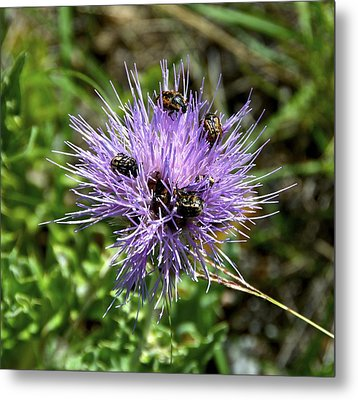 Metal Print featuring the photograph Beetlemania by Dee Dee  Whittle