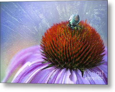 Beetlemania Metal Print by Juli Scalzi