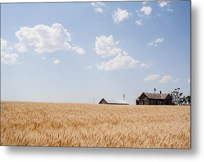 Before The Harvest Metal Print