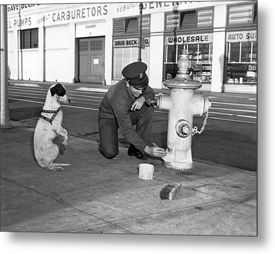 Begging Dog Hopes For Fast Job Metal Print by Underwood Archives