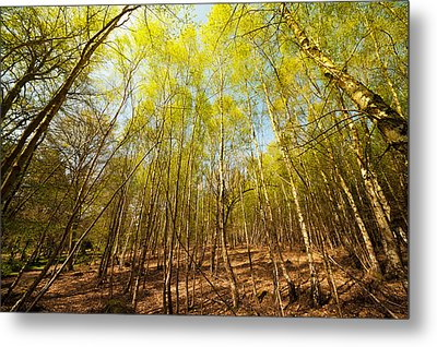 Beginning Of Spring Metal Print by Svetlana Sewell